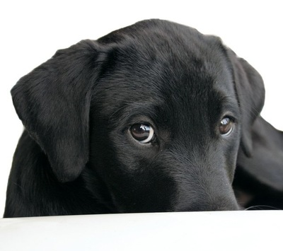 上目遣いの犬