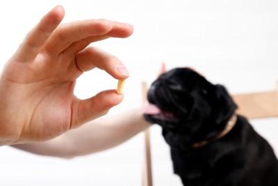 黒い犬と錠剤