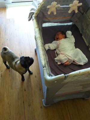 ウメと赤ちゃん