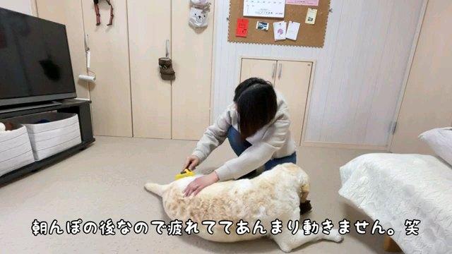 朝んぽの~字幕