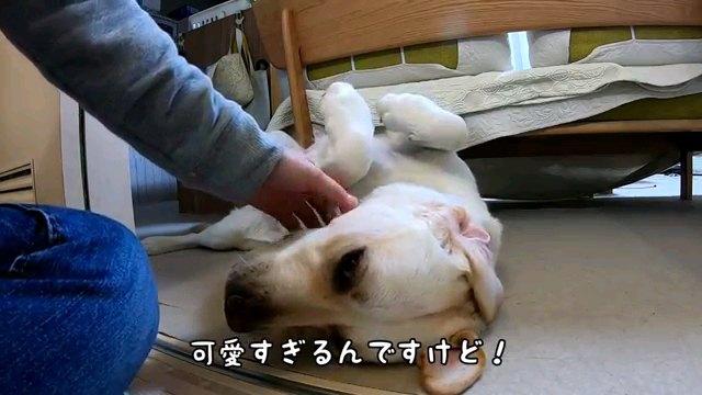可愛すぎるんですけど!~字幕