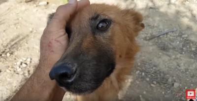 手の中に顔を寄せる犬