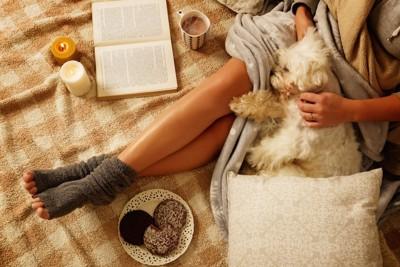 暖かい部屋で飼い主の膝で眠る犬