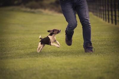 人の足元に走り寄る犬