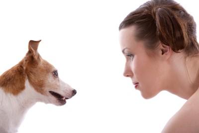 見つめ合う女性と犬