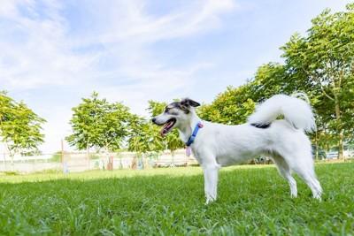青々とした緑と尻尾が長毛の犬
