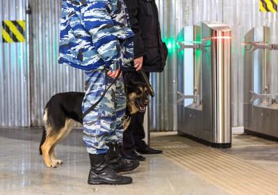空港で働く麻薬探知犬
