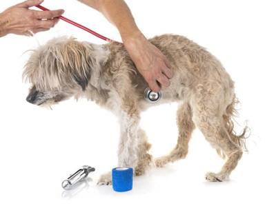 獣医とチベタンテリア