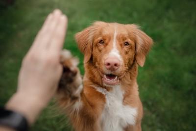 飼い主と笑顔でタッチする犬
