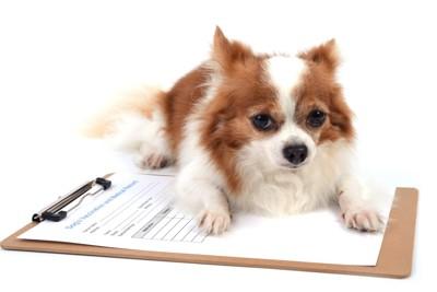 紙の上に乗る犬