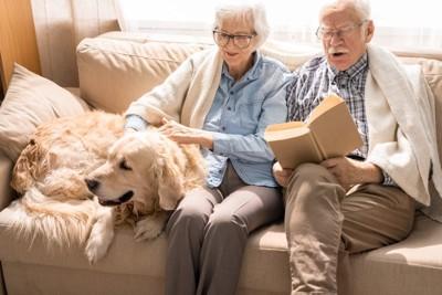 老犬と老夫婦