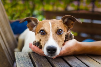 手のひらにアゴを乗せる犬