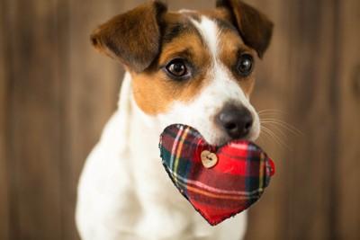 ハートのおもちゃをくわえている犬