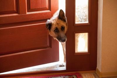 ドアから覗く犬