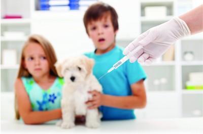 安田 獣医師の投稿画像