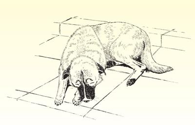 #犬を飼うってステキです-か?より#