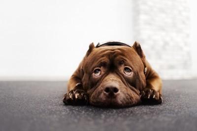 怯えた様子で伏せる犬