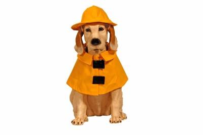 ポンチョと帽子をつけた犬