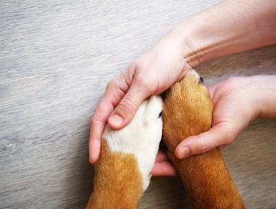 手をつなぐ犬と人