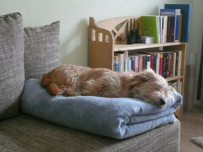 ソファでぐったりする犬