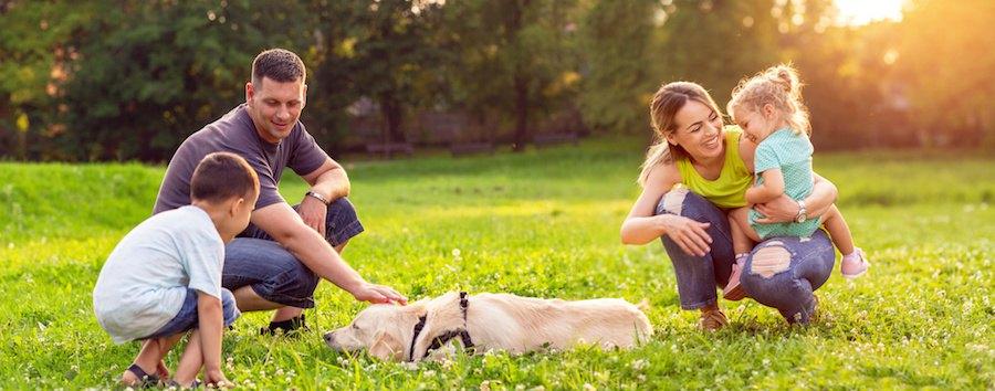 犬を触る父親と見守る家族