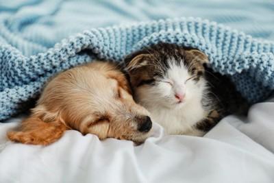 一緒に寝ている犬と猫