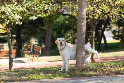 木におしっこしている犬