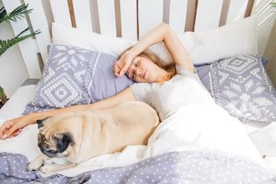 ベッドで寝る犬と女性