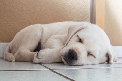 丸まって眠る子犬