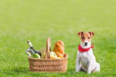 ピクニックのカゴの横で準備万端な犬
