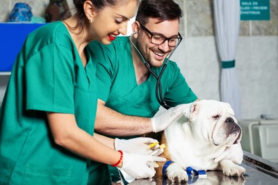 診察台の上でそっぽむく犬と笑顔の獣医