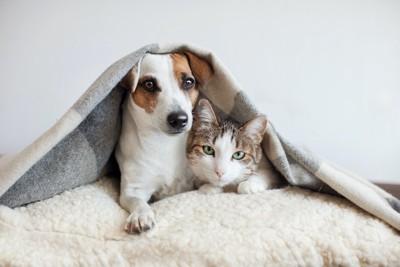 ブランケットをかぶって寄り添う犬と猫