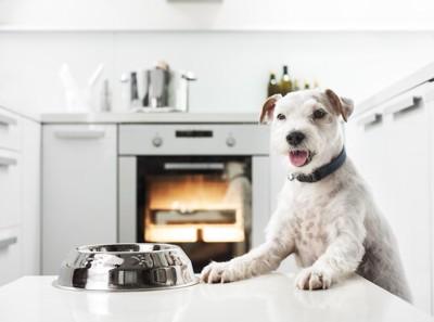 テーブルの上の器と食事を待つ犬