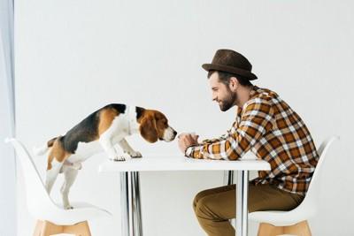 テーブルの上に上ろうとする犬