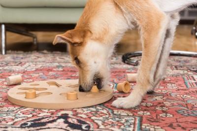 ボードパズルをする犬