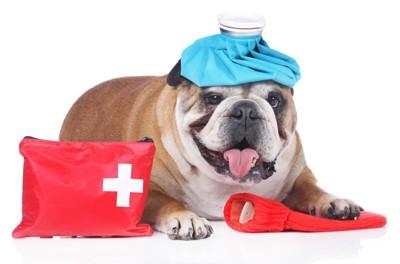 救急箱を持った犬