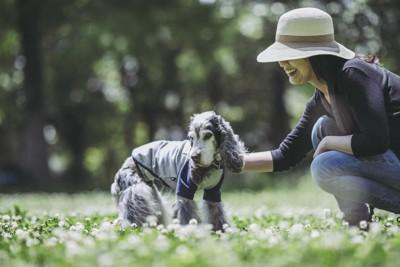 老犬との散歩