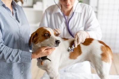 ストライプシャツの飼い主と診察台で聴診器を当てられる犬