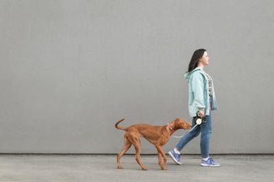 グレーの背景と散歩する犬と飼い主