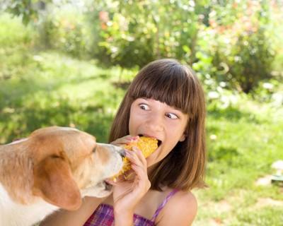 とうもろこしを食べる女の子と犬