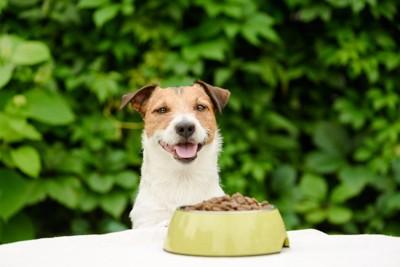 フードの前で微笑む犬