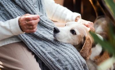 飼い主の膝に顎を乗せて甘える犬