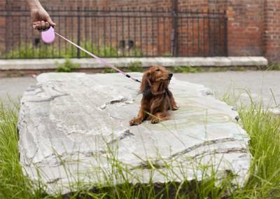 石の上にのって散歩を拒否している犬
