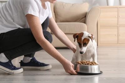 エサをあげる飼い主と犬