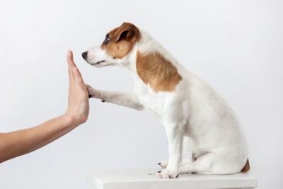 人と挨拶をする犬