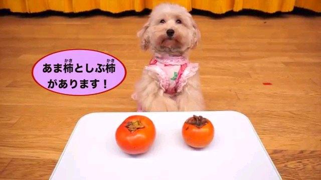 あま柿と渋柿~字幕