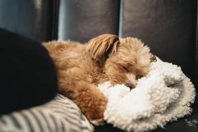ブランケットを抱きしめる犬