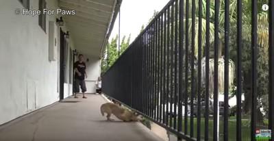 柵の下から身を乗り出す犬