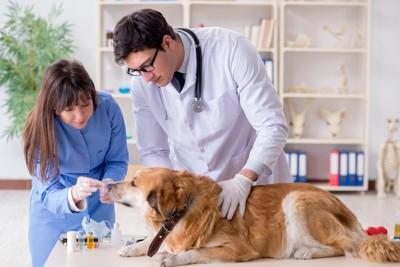 病院で獣医師に投薬される犬