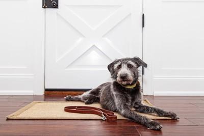 玄関前の散歩拒否の犬